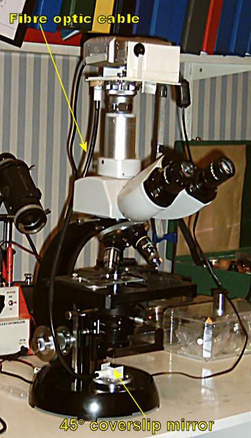 Flash Photomicrography